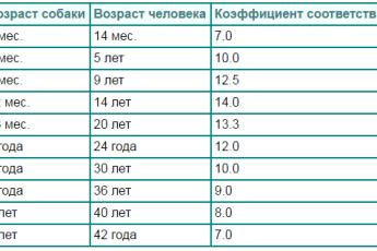 Эти таблицы покажут, сколько лет вашему питомцу в переводе на человеческий возраст