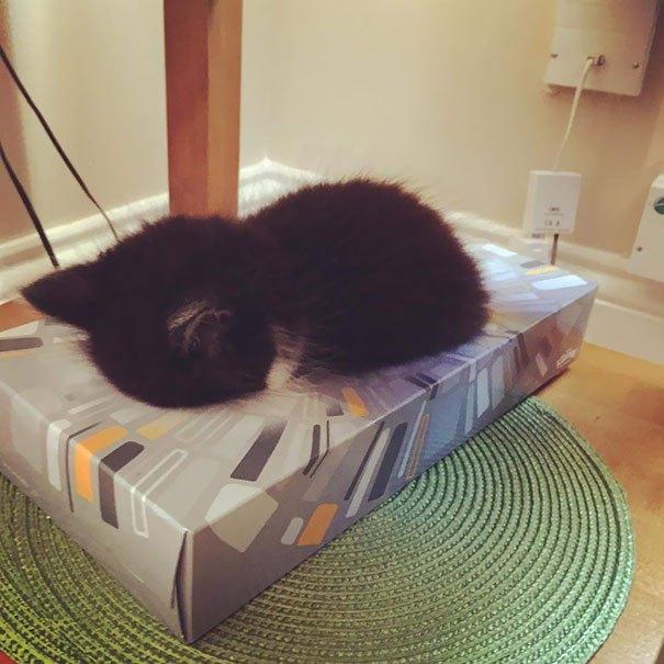 15 забавных доказательств того, что коты могут уснуть где угодно