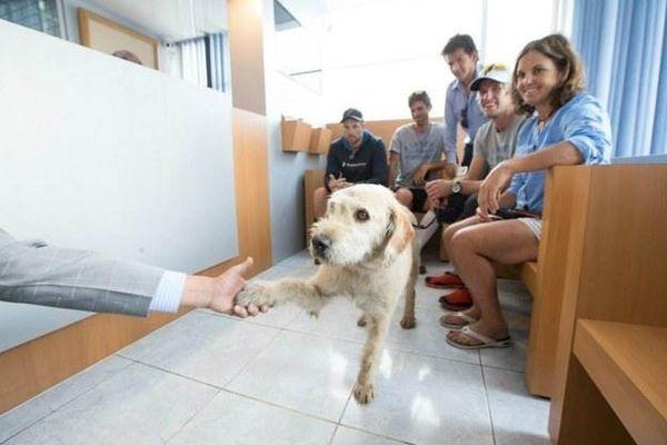 Спортсмены решили накормить бездомную собаку, не подозревая, к чему это приведет