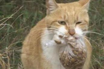 Эта бездомная кошка берет только упакованную в пакет еду. Причина растрогает вас до слез…