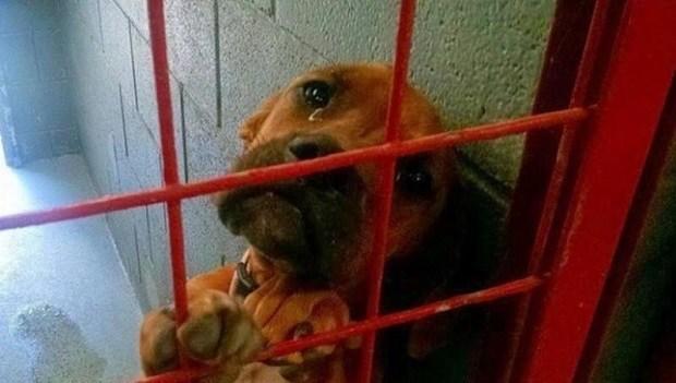 Фото этой собаки моментально разлетелось по Сети. Через один день ее жизнь кардинально изменилась