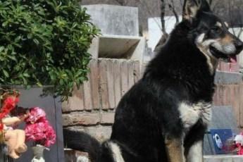 Этого пса с хозяином не разлучила даже смерть. Вот уже 10 лет он живет на могиле своего любимого человека…