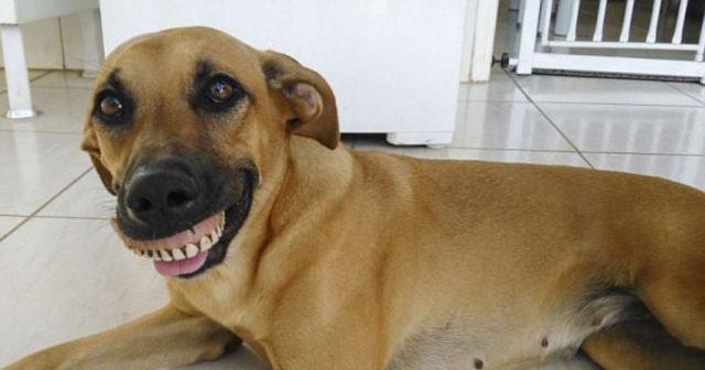Собака устроила «раскопки» во дворе. Когда она вернулась со своей находкой, хозяин чуть не лопнул от смеха!
