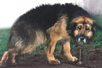 Жестокий хозяин держал собаку на цепи в течение 10 лет. Тогда соседи сделали единственно правильную вещь!