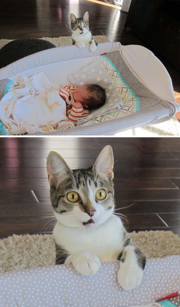15+ драматических котов, по которым давно Оскар плачет
