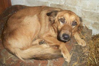 Хозяева купили квартиру, но в ней не было места для собаки… Она осталась голодать у дверей пустого дома!