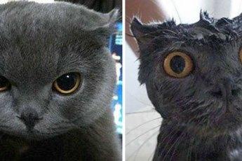 Помытые и оскорблённые: 8 котов, принявших ванну!