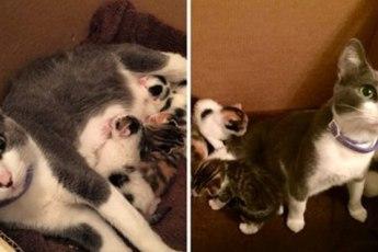 Бродячая кошка попросила помощи у людей, после чего преподнесла им необычный сюрприз