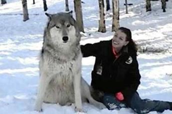 Волк садится рядом с женщиной в лесу, а теперь посмотрите на его дальнейшие действия