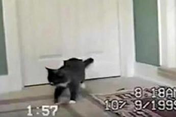 Владельцы не поверили своим глазам, когда увидели какого особенного друга привёл в дом их кот