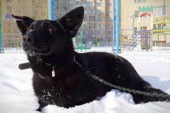 В Киеве собака спасла мужчину от нападения неизвестных