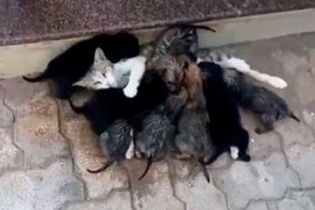 Уличная кошка нашла целый выводок брошенных щенят и стала для них приемной мамой