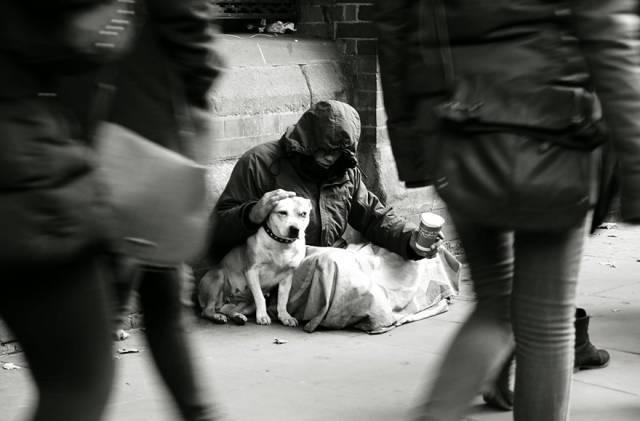Трогательные фотографии, которые доказывают преданность собак