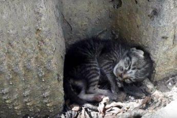 Это маленький котенок родился на улице и остался один. Тем не менее, он надеялся на то, что встретит своего человека
