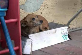 Брошенный щенок живёт в обувной коробке – когда люди поднимают его, то обнаруживают нечто ужасное