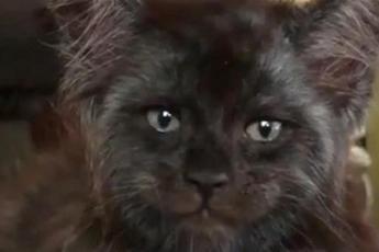 Кошка, от взгляда которой становится не по себе (Видео)