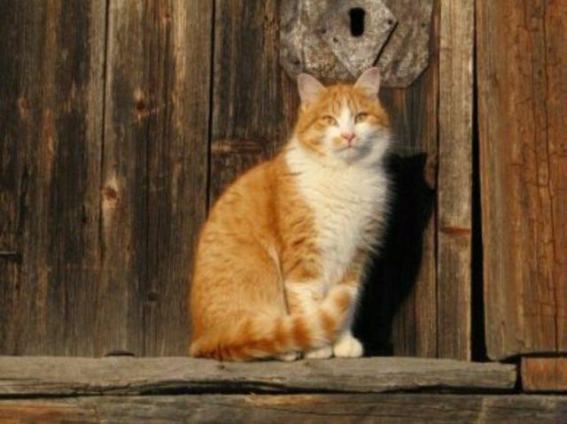Почему кошки приходят в чужой дом — главные причины и приметы