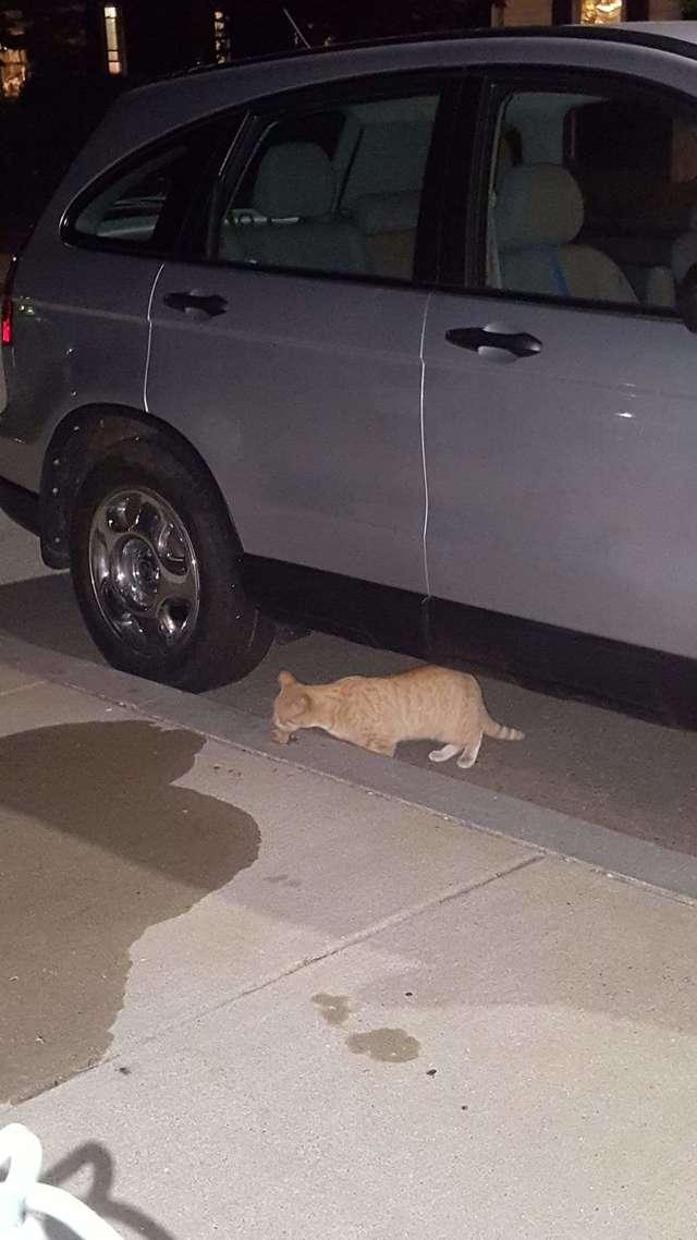 Бродячий кот пришел на порог дома и решил остаться навсегда
