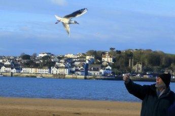 Вот уже 12 лет эта чайка каждый день прилетает к мужчине, который ее спас