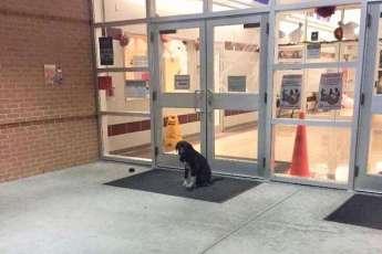 Каждое утро пес сидел возле дверей школы и вилял хвостом, ожидая помощи