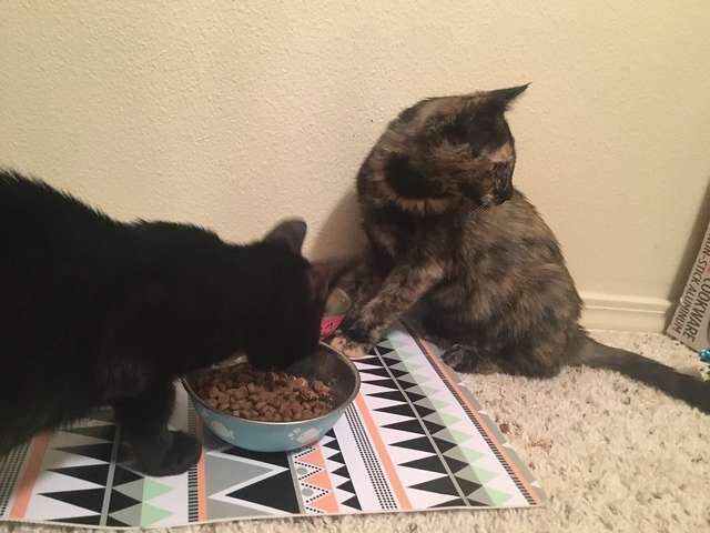 Пара взяла из приюта котенка, но дома в переноске обнаружили еще одного