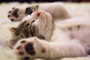 История о том, как покладистая кошка из дома сбежала