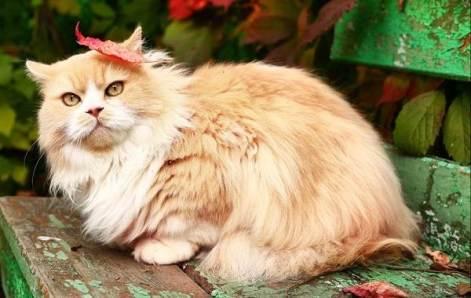 Как посчитать, сколько лет коту по нашим меркам