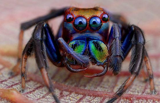 Самые опасные пауки в мире | Интересные факты