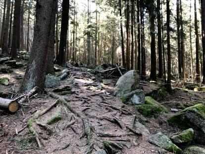 Cesta na Kraví horu