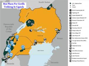 Best Time To Go For Gorilla Trekking