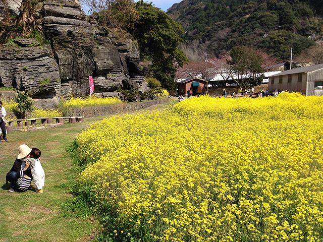 2016年3月28日撮影した七ツ釜鍾乳洞界隈の菜の花と櫻