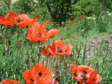 cvety v Borzhomskom zapovednike