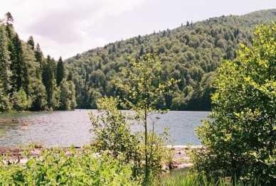 lesa vokrug ozera Koz