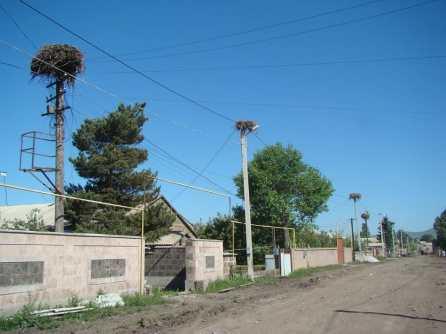 Ниноцминда - город аистов