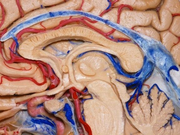 pituitari
