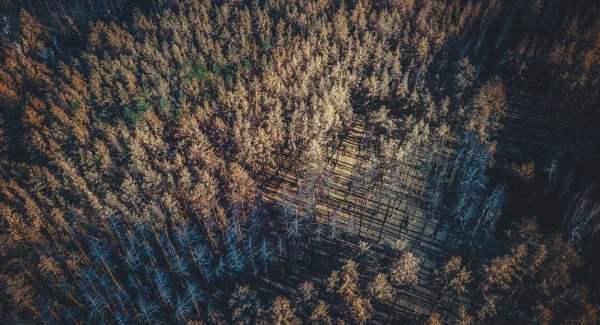 В сети поделились фото сгоревших лесов на Луганщине ...
