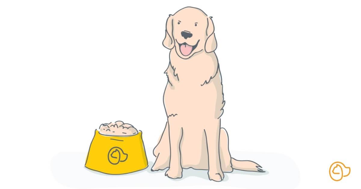 Croquettes Labrador Retriever ♡ : Comment choisir ? | Hector Kitchen |  Hector Kitchen