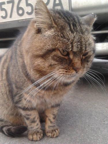 Зло во плоти: фото опасных котиков, которые тебе не рады ...