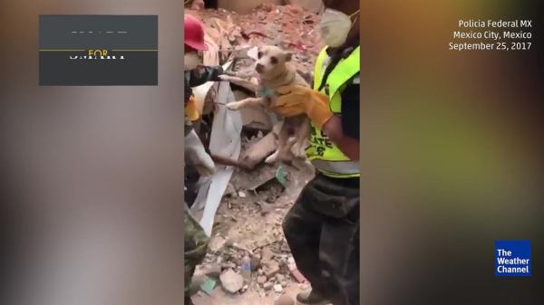 Rescuers Find Furry Survivor in Mexico | The Weather Channel