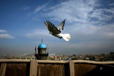 Khalil and his pigeons in Murat Kahne, old city Kabul, overlooking the Abu Faisal mosque/shrine minaret.
