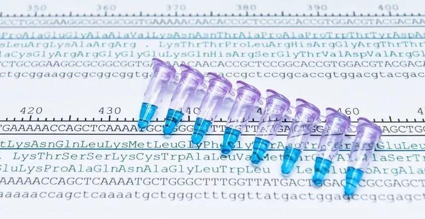 Secuencias de codones de aminoácidos