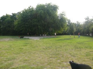 Hampton Park dog run