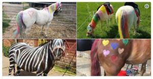 Cavalos pitados