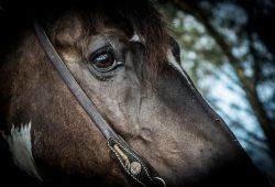 Equinos - Crédito Fagner Almeida