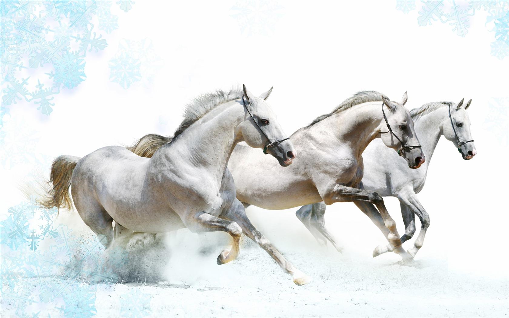 Super Pferd Fototapete 1 9