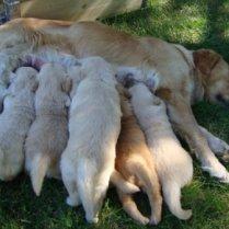 15 cuccioloni