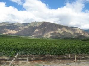 Montañas de Cafayate y sus viñedos.