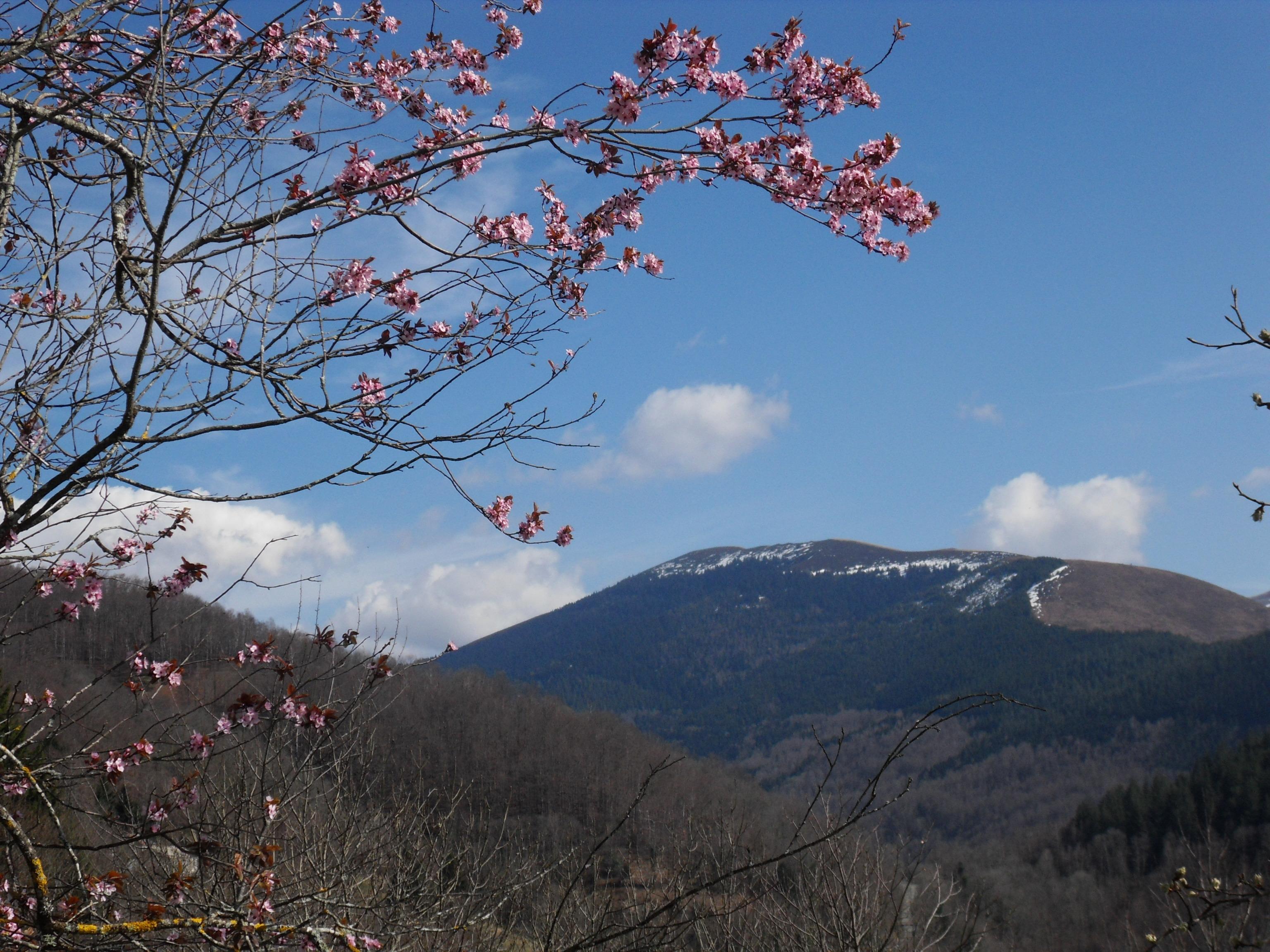 Au Péré… le printemps est bien là!