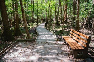 25 Best South Carolina Destinations South Carolina Points of Interest  Congaree State Park