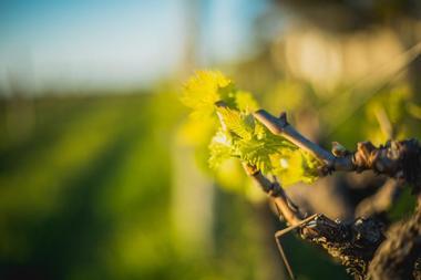 Bray Vineyards